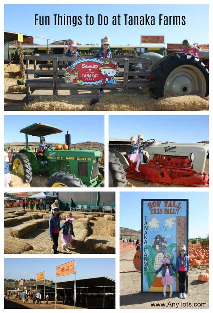 fun things to do at tanaka farms