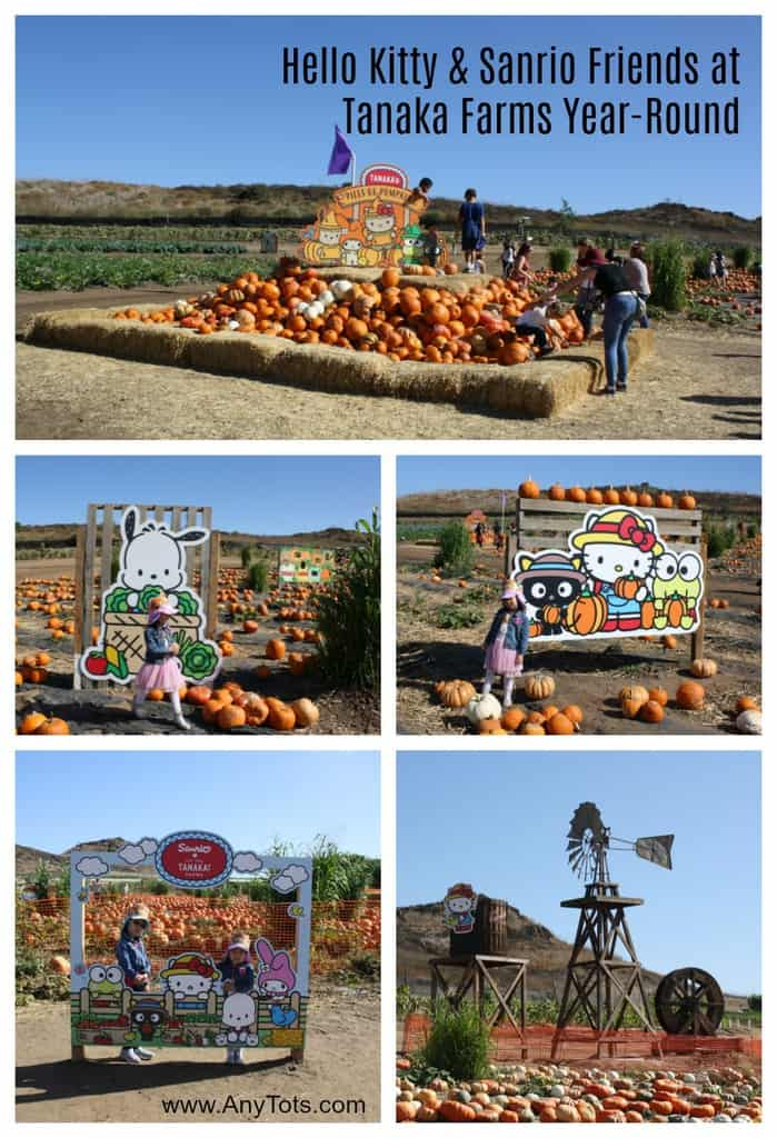 tanaka farms hello kitty pumpkin patch
