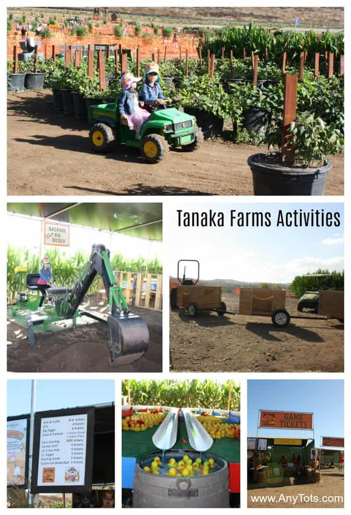 tanaka farms activities