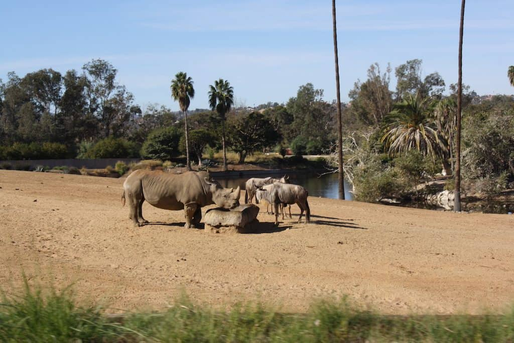 Tips for Visiting San Diego Safari Park