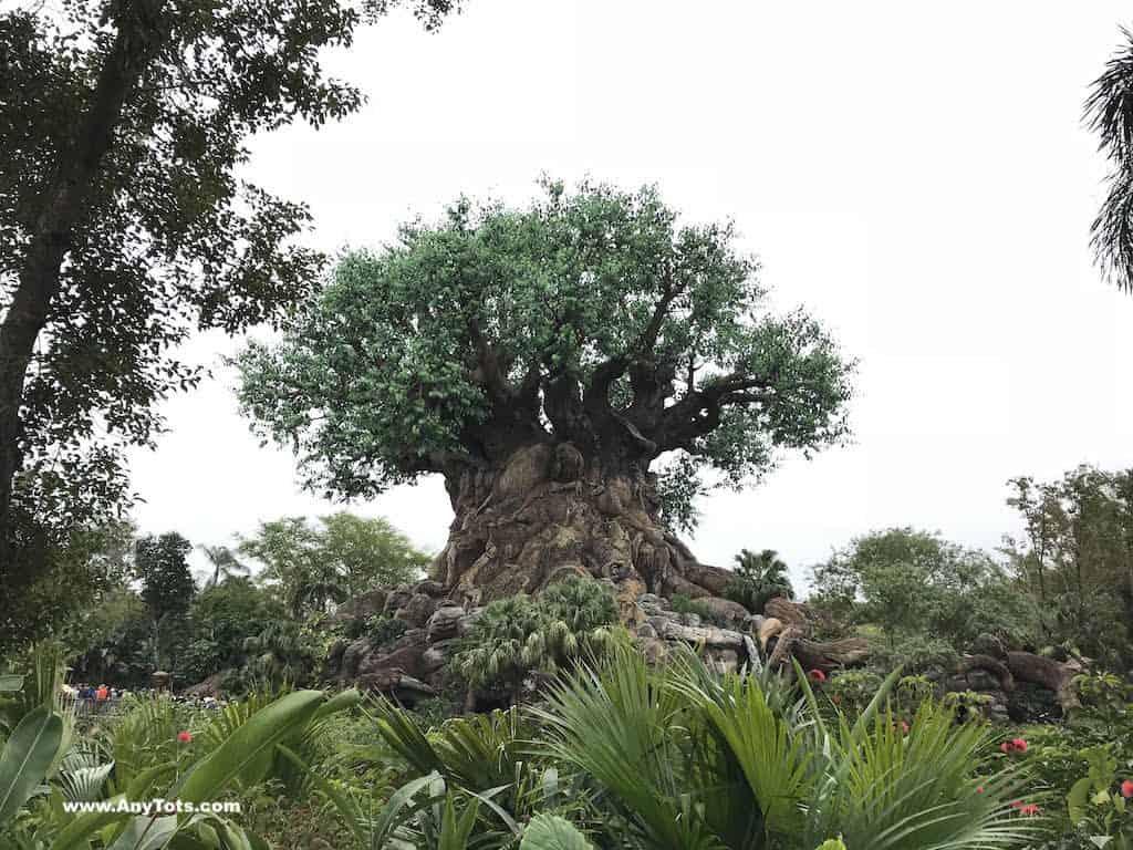 10 Tips for Visiting Disney World Animal Kingdom