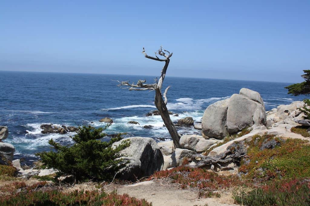 17 Mile Drive Ghost Tree