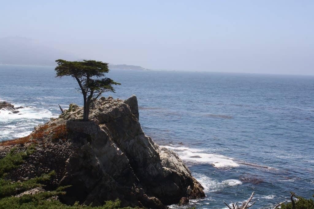 Long Cypress 17 Mile Drive
