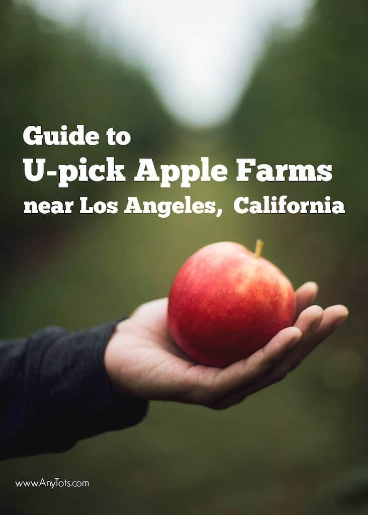 Apple Picking near Los Angeles
