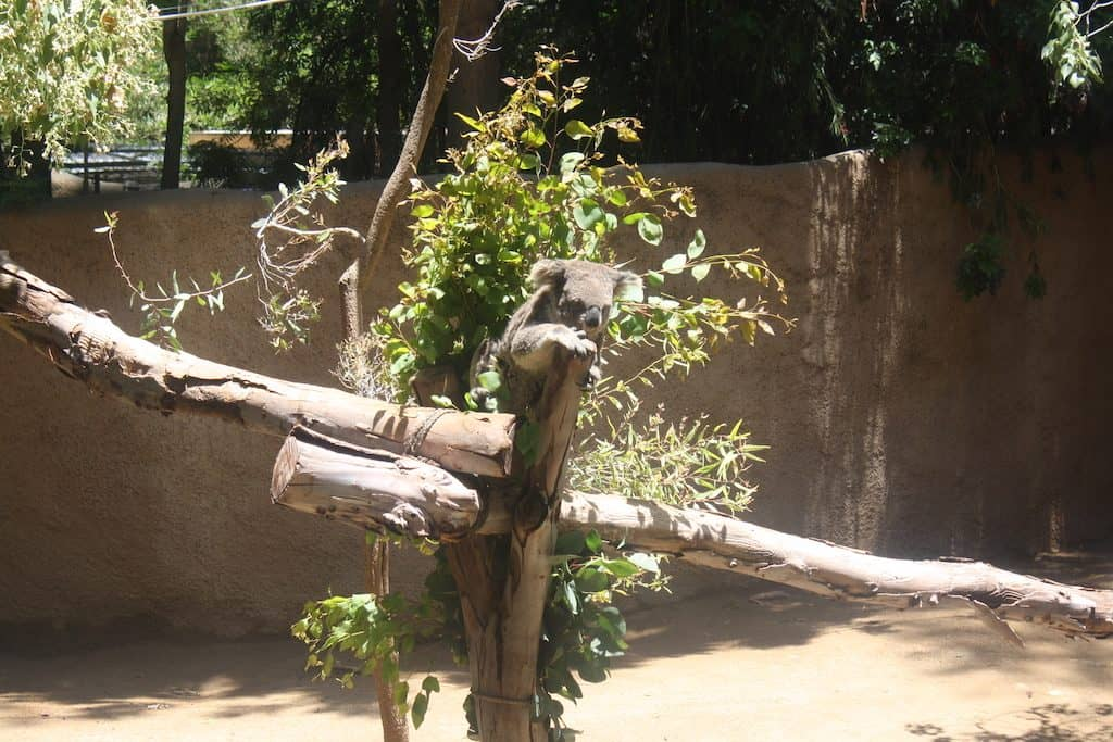 LA Zoo Animal