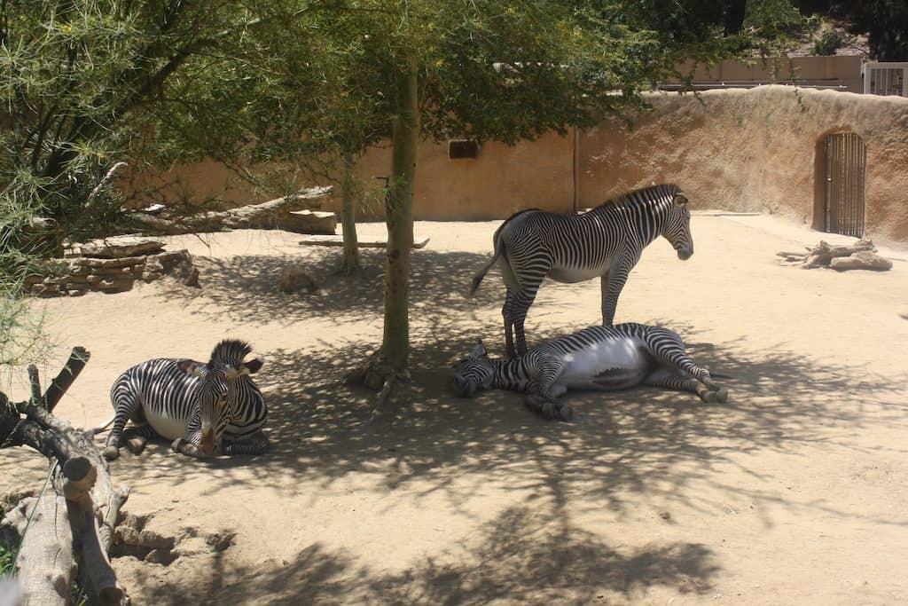 LA Zoo Animals
