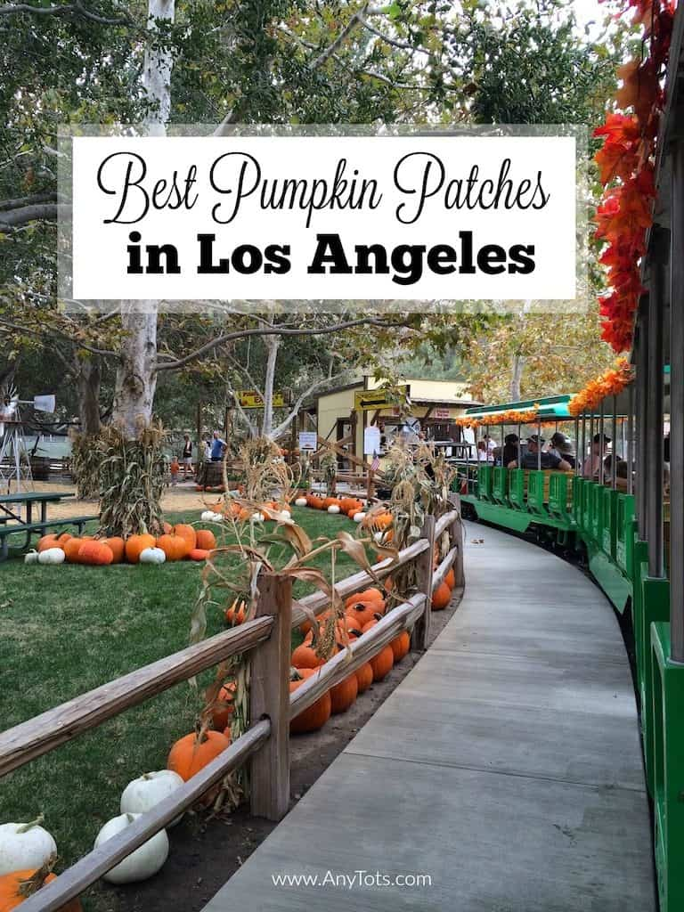 Best Pumpkin Patches in Los Angeles